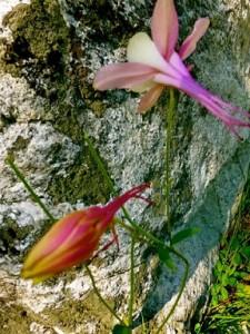 Flowers_on_Rock_P1100394