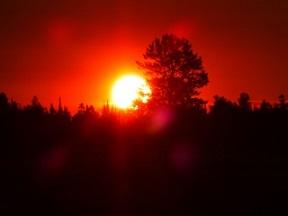 Forest_Sunrise_P1110441