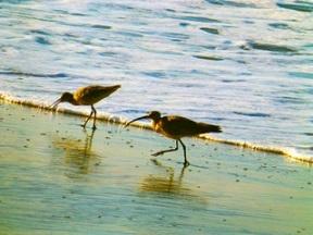 Ocean_Birds_P1110950