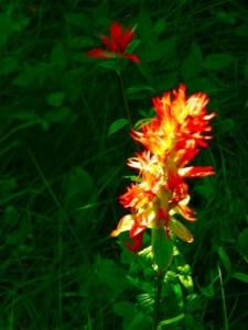 REd_White_Flower_P1100307