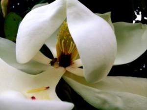 White_Petals_5277