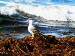 Sea_Bird_1120278