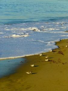 Birds_on_Beach