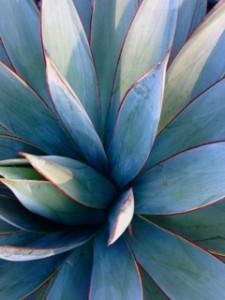 Blue_Leaves