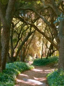 Wooded_Path
