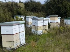 Bees_P1150407