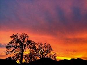 Tree_Sunset_9474