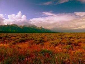 Meadow_Storm_1100788