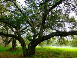 Trees_1180814