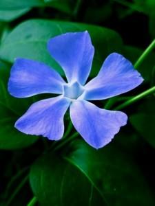 Flower_P1190372