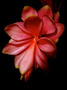 Red_Flower_1080096