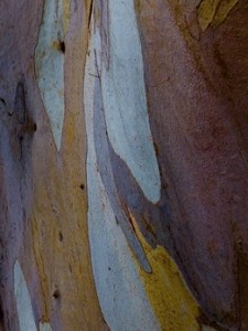 Bark_Color_P0002